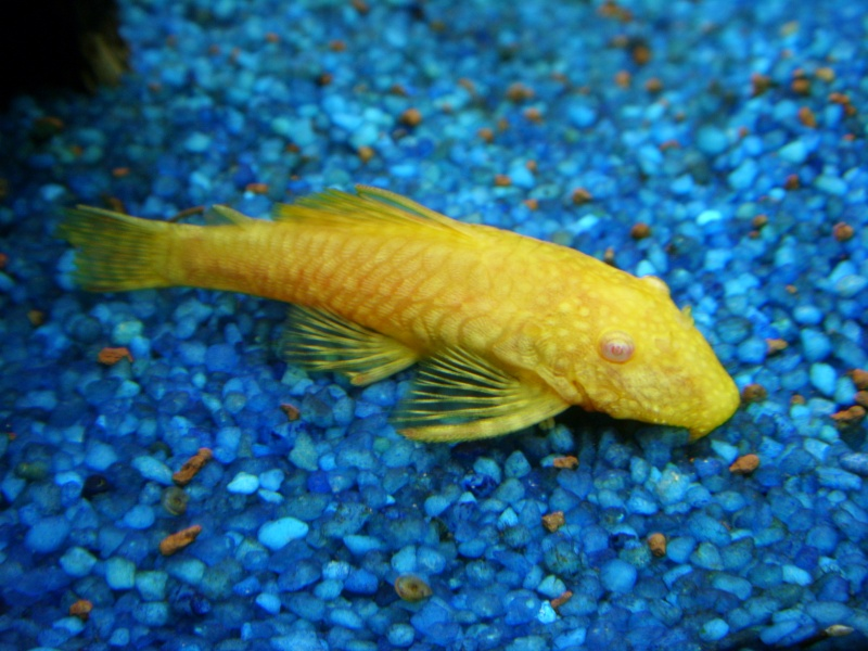aquarium juwel 180 St833717