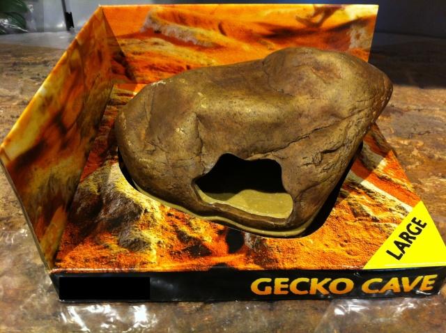 Conseils pour terrarium pour Gecko léopard  - Page 3 Img_1612