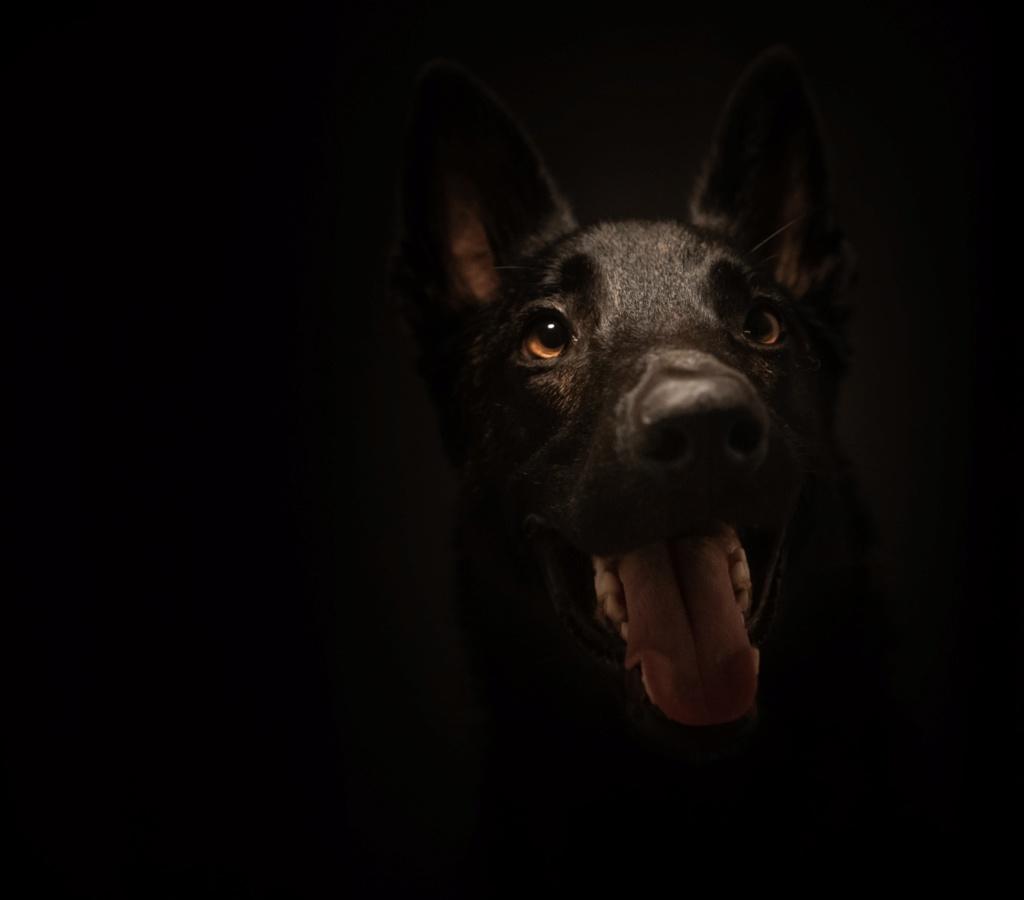 Deuxième essai portrait de mon chien 469aa710
