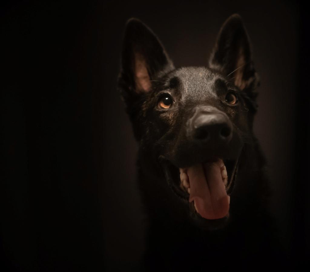 Deuxième essai portrait de mon chien Bca8f310