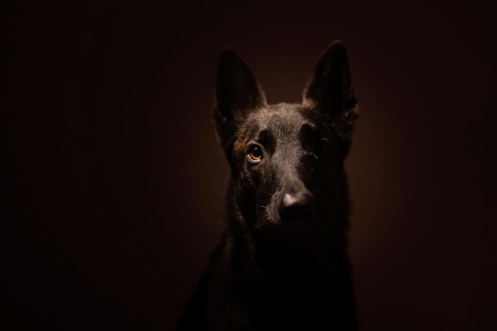 Premier essai portrait de mon chien  Ed376210