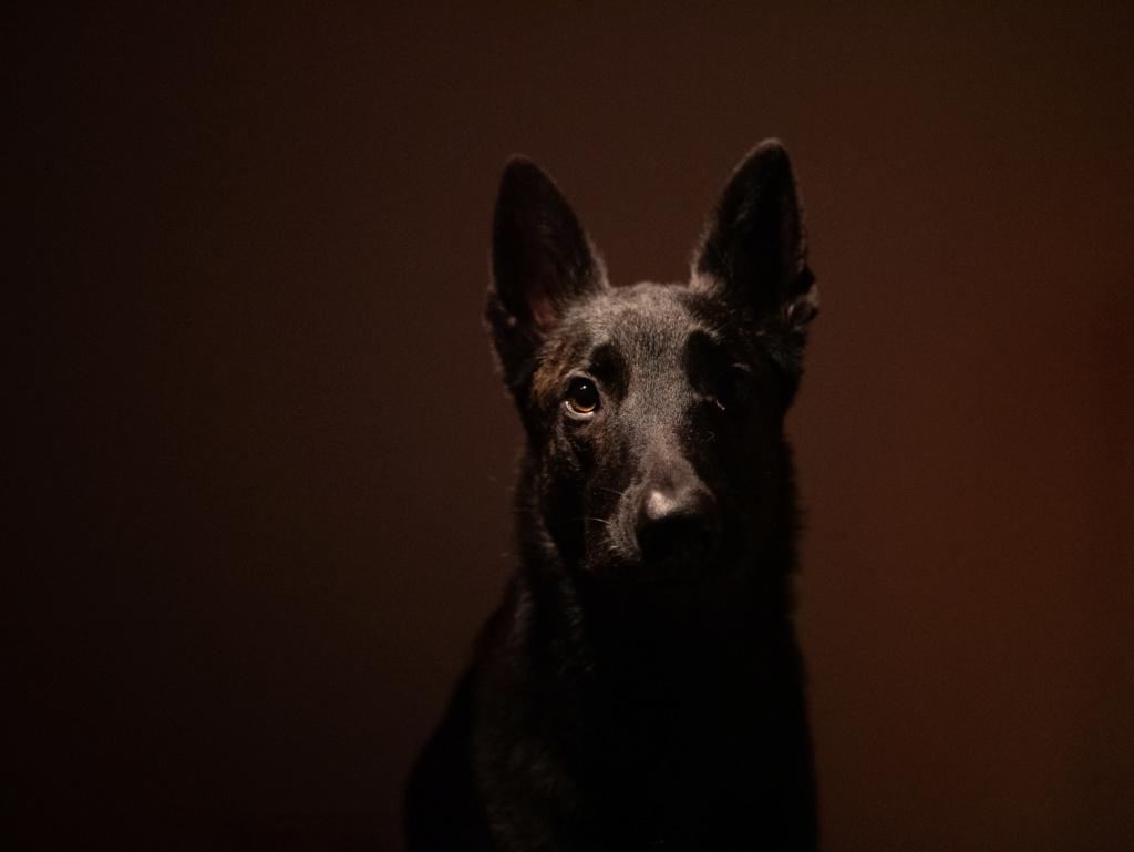 Premier essai portrait de mon chien  P1030710