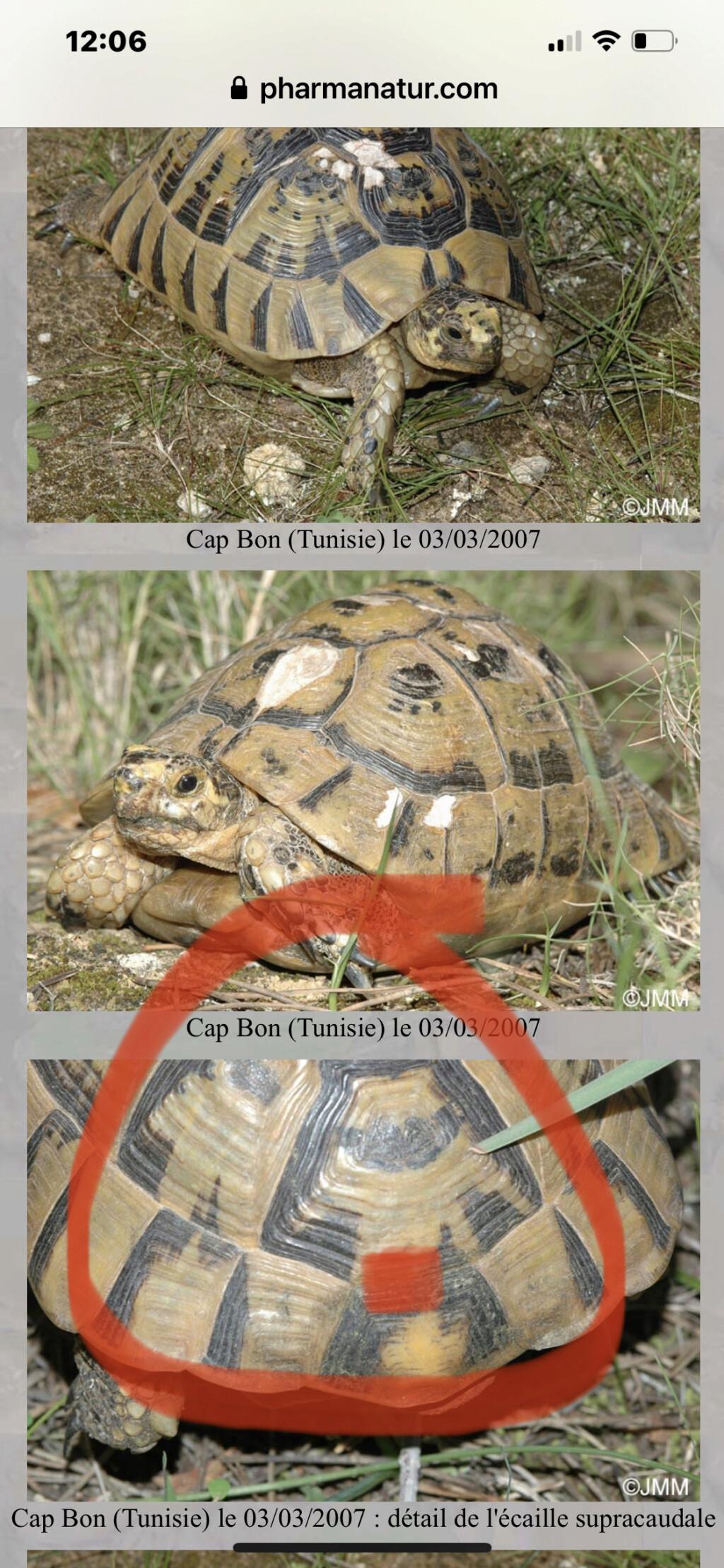 Identification de ma tortue Tank - 1 - Page 2 B13b3210