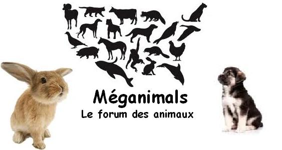 Méganimals