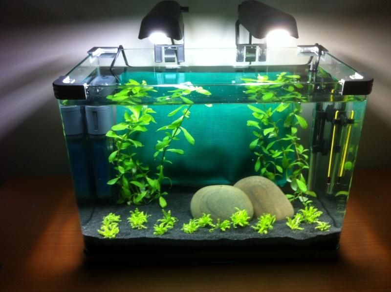 Mon projet nano spé crevettes enfin réalisé Img_0220