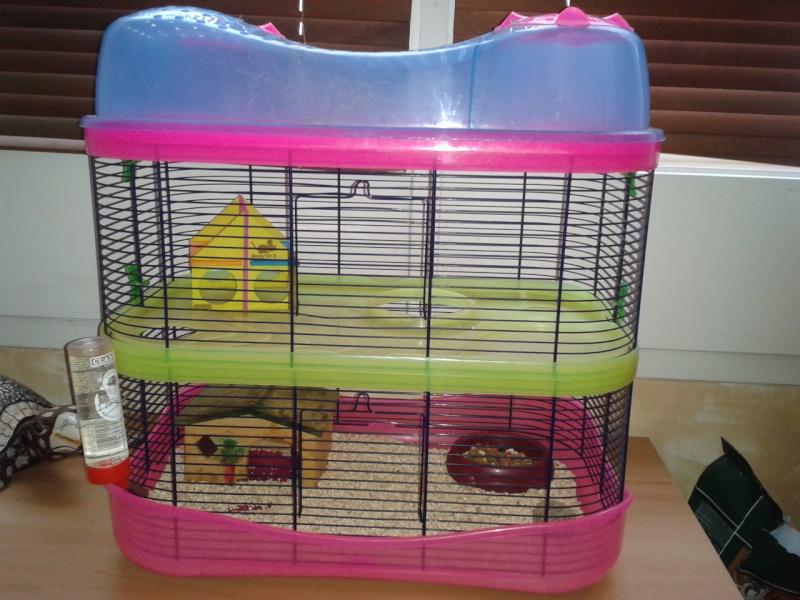 VEND CAGE 3 NIVEAUX ET DONNE 2 RATTOUNES - DEPT 92 2012-111