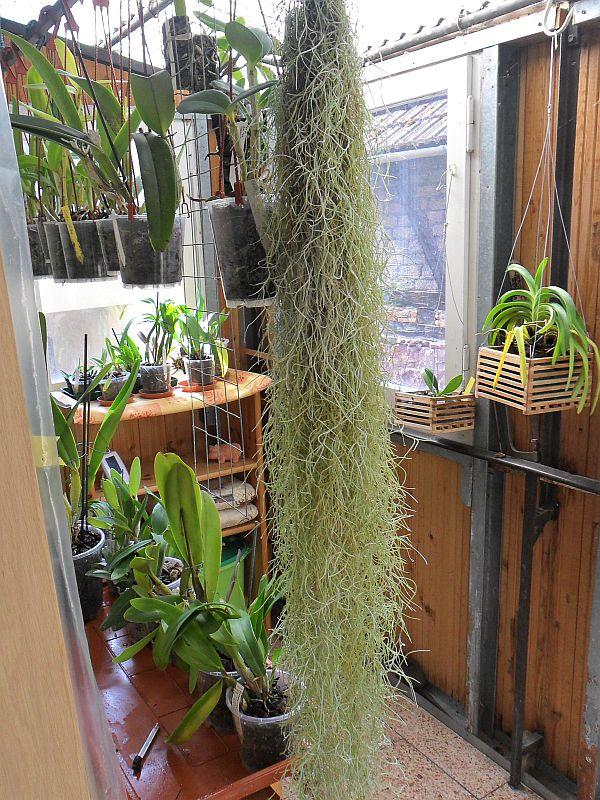 Freilandaufenthalt von Orchideen Vordac10