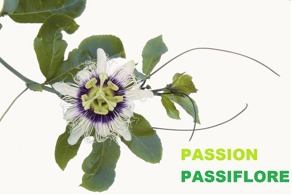 PASSION PASSIFLORE