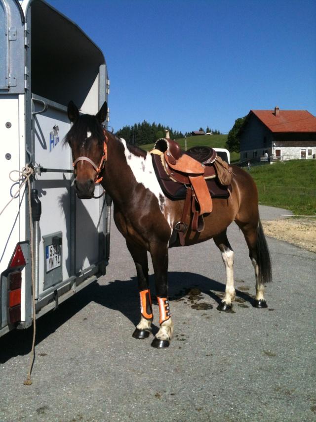 Equitation Américaine (Western)  Img_3410