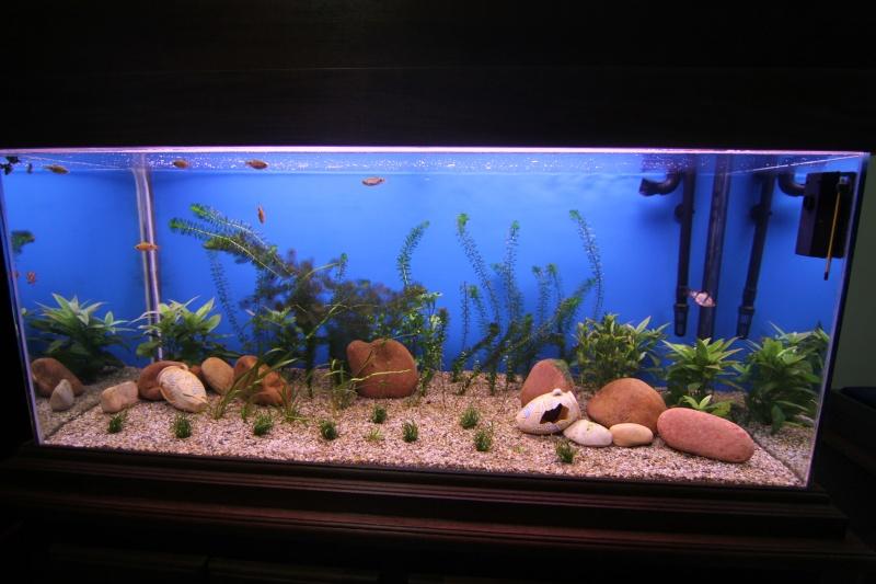 aquarium 325 litres Img_2611