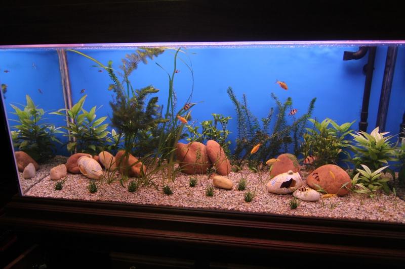 aquarium 325 litres Img_2710