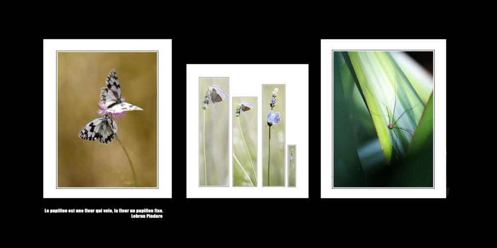 mon livre photo..prends forme Papill10