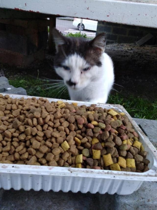 Photos des chats sauvés, avant/après - Page 11 Choupe10