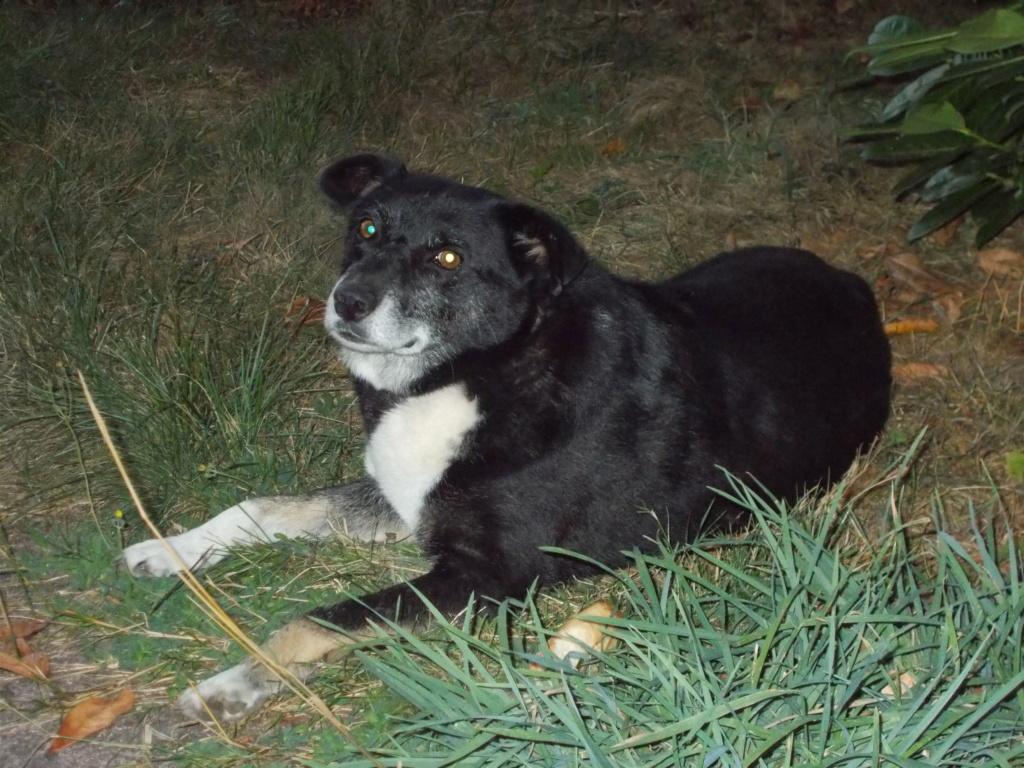 RUDOLF - mâle, croisé, de taille moyenne, né en 2007 environ - (Pascani) - en FALD chez MurielVosges (88) - Page 5 Dscn0219