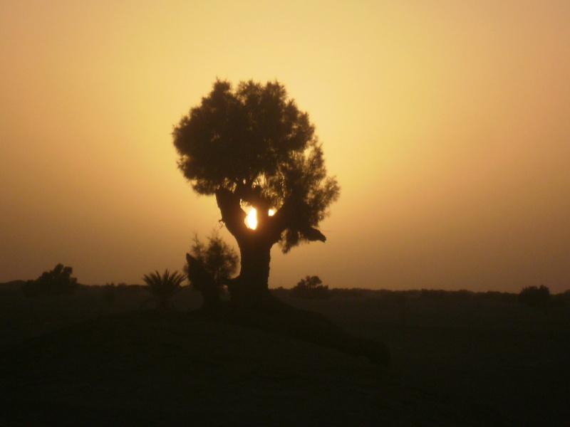 [nos beaux pays : la France, le Maroc et .....  le Monde] Couchers de soleil - Page 3 Maroc_15