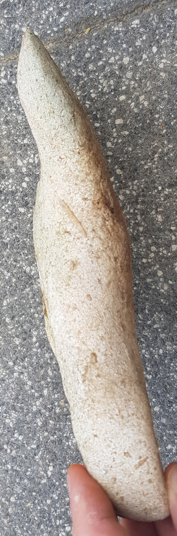 Hache antique en pierre ? 20190822