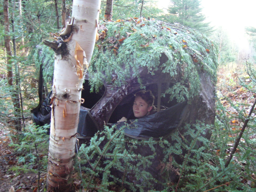 Orignal et odeur d'eucalyptus  P1050510