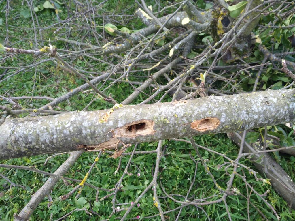 Mais qui fait des trous dans mes arbres! Img_2179