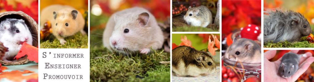 Hamsters Club Francophone
