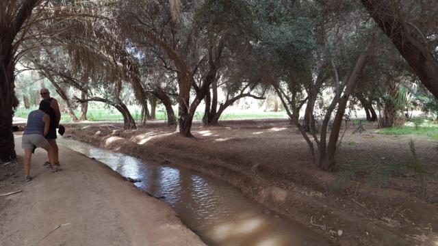 [Maroc Camp/Dernières nouvelles] confinement camping  Hakkou à Aoufous  20200350