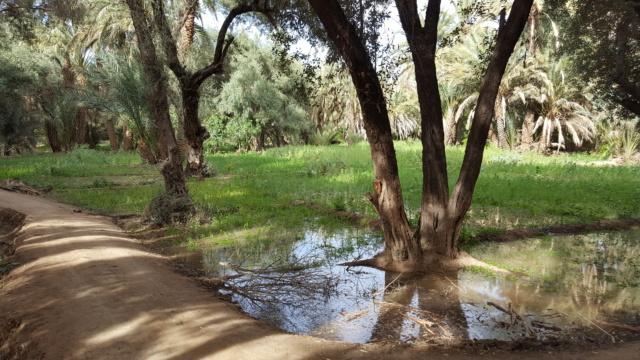 [Maroc Camp/Dernières nouvelles] confinement camping  Hakkou à Aoufous  20200352