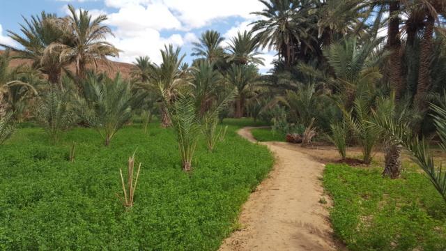 [Maroc Camp/Dernières nouvelles] confinement camping  Hakkou à Aoufous  20200353