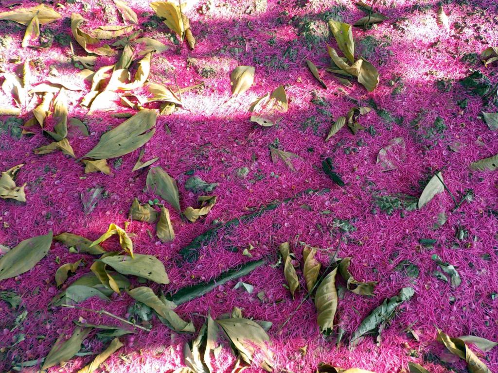 Fleurs de saison - Page 28 Pommie10