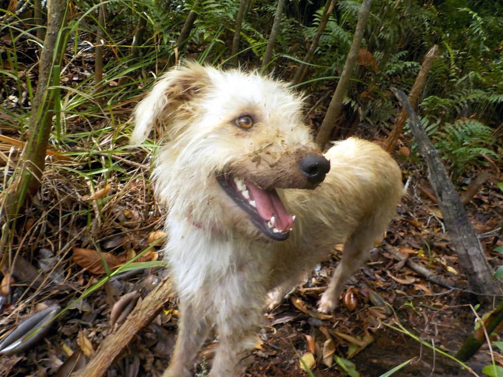 La gent canine  - Page 7 Zozo10