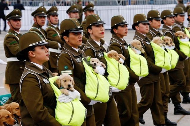 PHOTOS : Défilé au Chili Chiots10