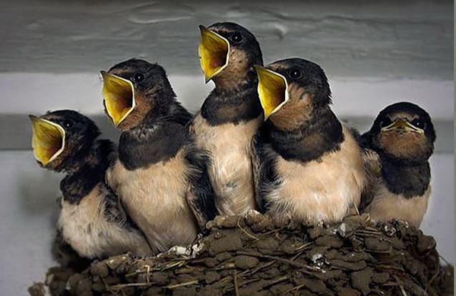 oiseau10.jpg