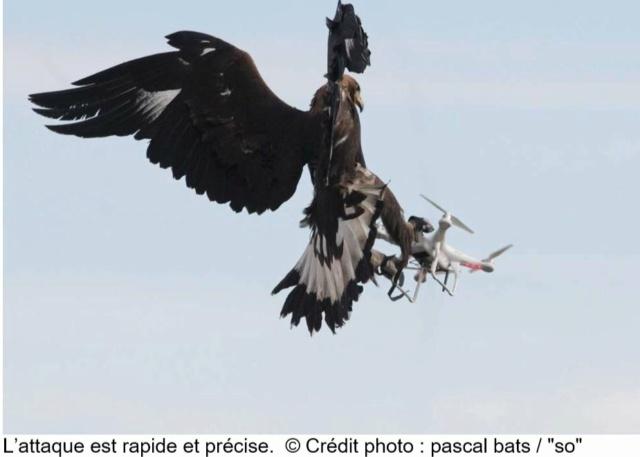 Des Rapaces et des drones… Rap310