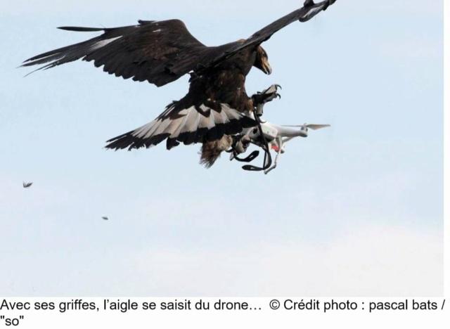 Des Rapaces et des drones… Rap410