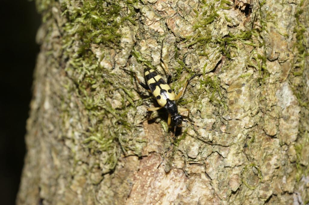 Les insectes des Yvelines  _dsc0211