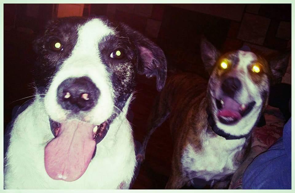 Pets Galore!!!!! Fb_img10