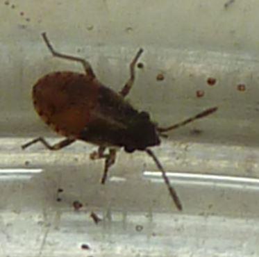 Invasion minuscules insectes Petiti10