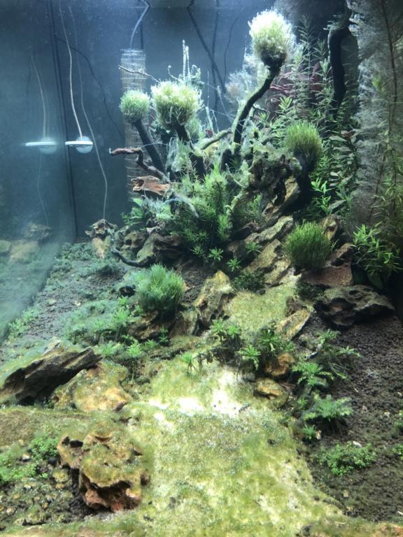 Démarrage 250 L  / Problème d'algues  751da710