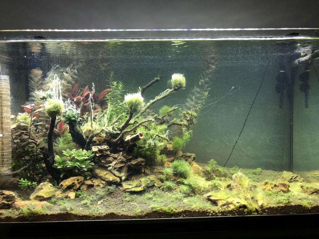 Démarrage 250 L  / Problème d'algues  Ba60ef10