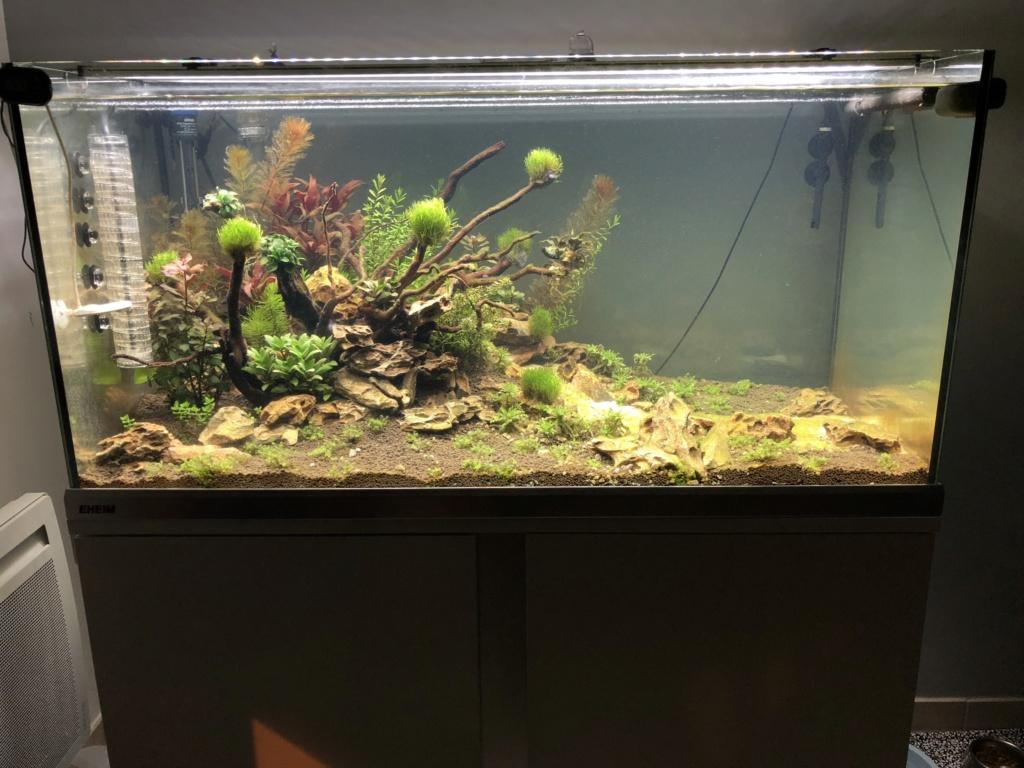 Démarrage 250 L  / Problème d'algues  Img_1613