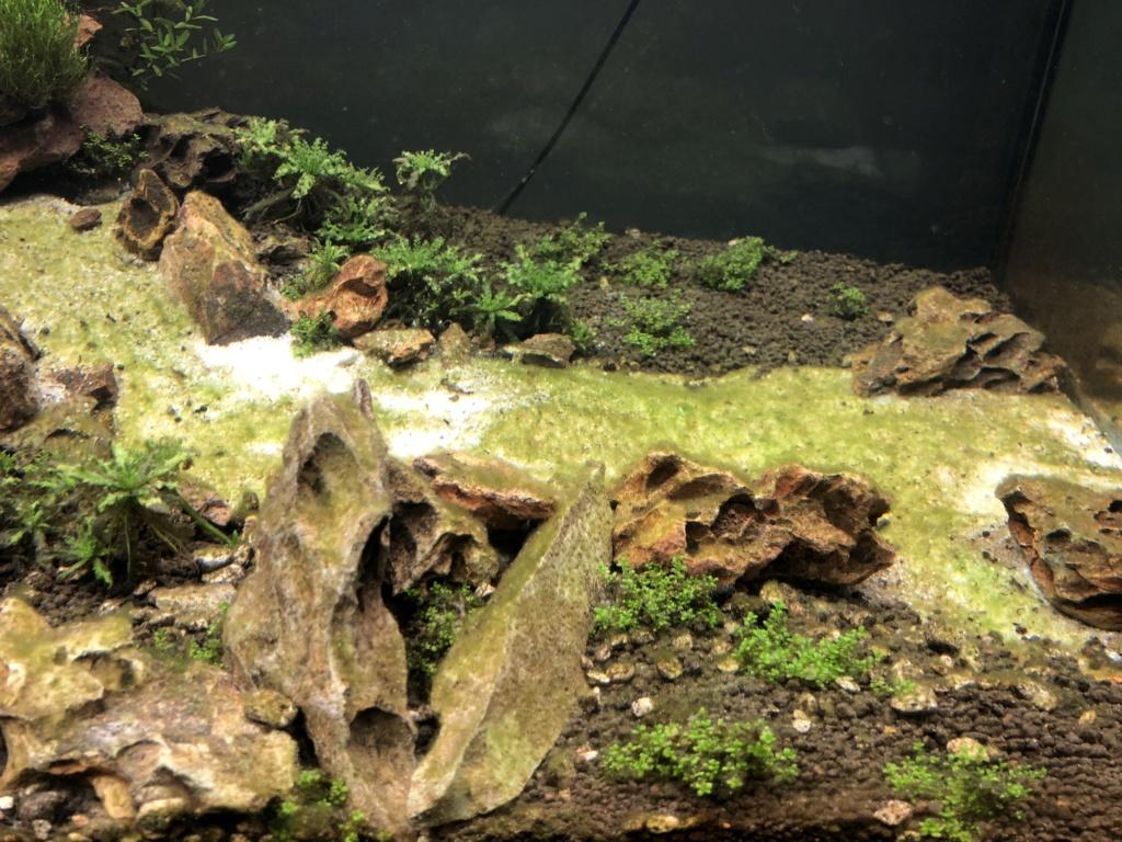 Démarrage 250 L  / Problème d'algues  Img_1614