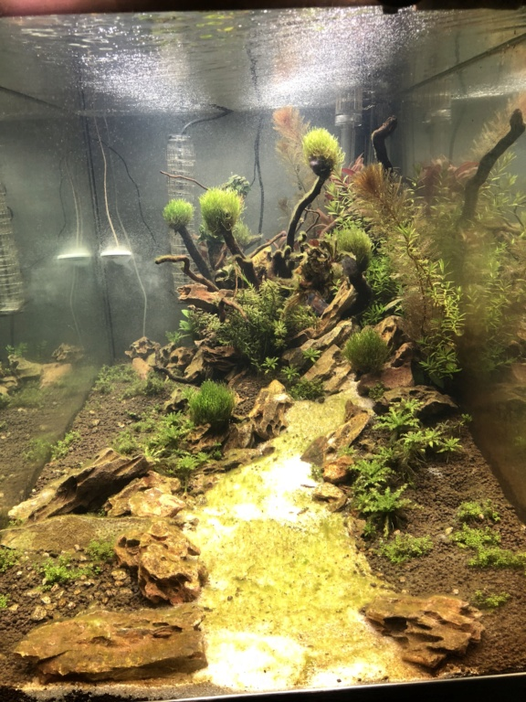 Démarrage 250 L  / Problème d'algues  Img_1615