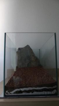 Mon projet aquarium low tech/aquascaping P1030110
