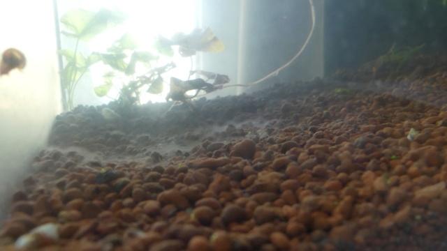 Mon projet aquarium low tech/aquascaping - Page 2 Voile_11