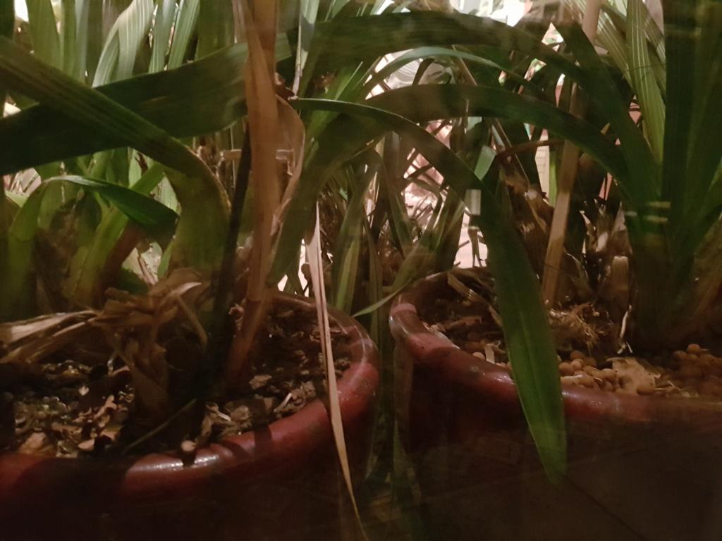 HELP base orchidée dessechée 20190210