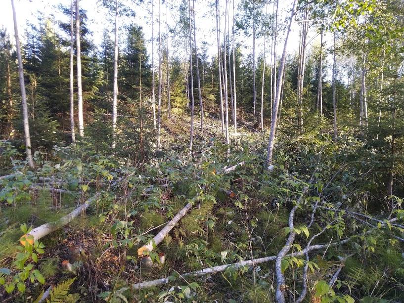 Onko kenelläkään kokemuksia TAR101 Hakkuri puulle Max.100 mm TARMO  Hakema10