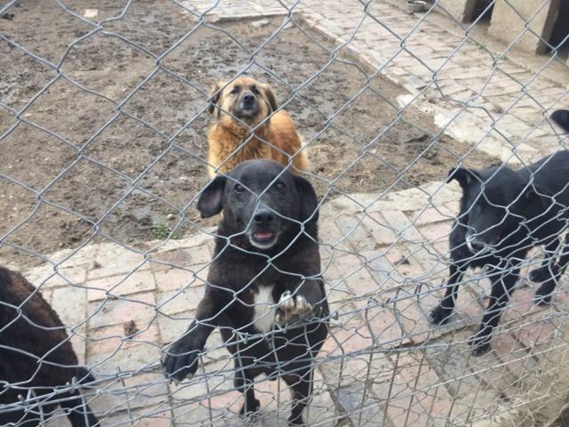 JUSTIN M-X labrador noir, taille moyenne, env. 25 kg, né 2013 Ex-Backa(BELLA)PRET/ BESOIN DE SOINS - Page 4 Artho_18