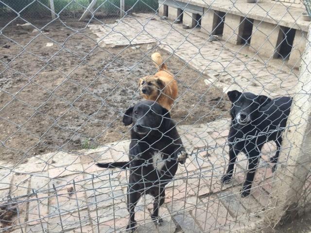 JUSTIN M-X labrador noir, taille moyenne, env. 25 kg, né 2013 Ex-Backa(BELLA)PRET/ BESOIN DE SOINS - Page 4 Artho_19