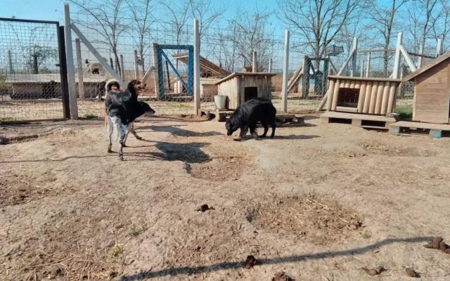 DJINA X-F, taille moyenne, env. 18 kg, née 2012 Ancien de Backa (BELLA) Prête à voyager - Page 2 Djina_12