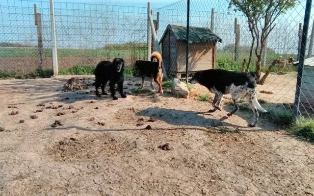 DJINA X-F, taille moyenne, env. 18 kg, née 2012 Ancien de Backa (BELLA) Prête à voyager - Page 2 Djina_13