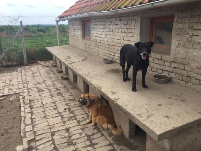 JUSTIN M-X labrador noir, taille moyenne, env. 25 kg, né 2013 Ex-Backa(BELLA)PRET/ BESOIN DE SOINS - Page 4 Easy_j13