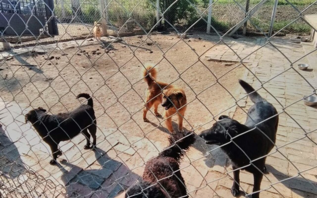 JUSTIN M-X labrador noir, taille moyenne, env. 25 kg, né 2013 Ex-Backa(BELLA)PRET/ BESOIN DE SOINS - Page 4 Easy_w14